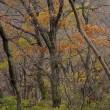 名残の紅葉~二上山