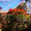 『紅葉谷』 枝々を