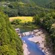秋の棚田 有田川町・あらぎ島