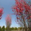 春 ~見沼にて4