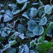 朝霜。。。!
