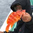 <06/16> テンヤ釣り・・・大漁だぁ~
