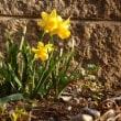 春の仲間たち