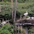 雲南市の幸福の鳥・・・