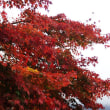 箱根を紅葉見に行って来ました