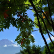 大石公園と本栖湖からの富士