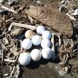 渚のゴルフボール