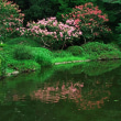 神代植物公園水のある花たち
