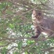 木登り上手