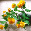山吹の花を活ける: