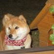クリスマスツリ~~!