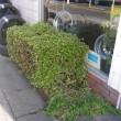 スッキリ さつきの剪定と観葉植物!