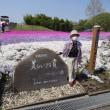 市貝町の芝桜をおふくろさんと見に行きました