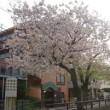 目黒でお花見2015(7)しだれ桜の公園&まだ桜を楽しめる立会川緑道