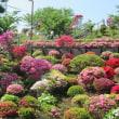 名所へ行かなくても、自宅近くに「素敵なつつじ」が咲いている場所があります。