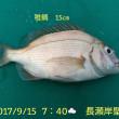 笑転爺の釣行記 9月15日☁ 長瀬・浦賀
