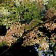 旧古河庭園の初秋・・2