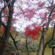 奈良・奥山紅葉ウォーク・・・『東海道自然歩道・滝坂の道(旧柳生街道)』