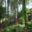 ピラミッドを作って林内整理 (9月30日)