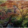 新勝寺の紅葉