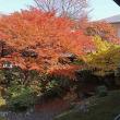 京都・相国寺 PⅡ