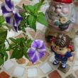 福岡サンパレスの余韻な薄紫の星屑101号