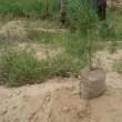 中国での植林活動2