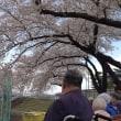今年も無事に桜が見れて
