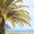 fotolia:「ヤシの木と駿河湾の風景」