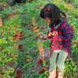 秋の一日 孫と一緒に、稲刈り・芋掘り・クリ拾い