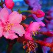 春の彩りとせき健一郎と大黒天、そしてエロティック