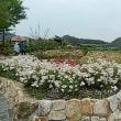 初めて見ごろ・世界有数の岐阜県可児市花フェスタ記念公園のバラ園へ