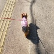 大多喜城へ行ってきました