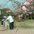 桜と星の館