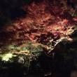 京都の紅葉見頃になっています