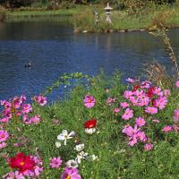 河川環境楽園 7