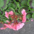 賀状のイラストと花