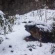 本格的な雪の季節が到来か