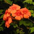 暑苦しい花