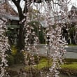 旧有栖川宮邸& 本満寺の枝垂桜と 護王神社