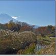 ヤマガラ・コゲラ・アオジの姿と2か所からの富士山の景色を・・・