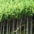京都の北、京北「北山杉の里」。毎週日曜日に行われる朝市。地元の産品がいろいろ