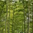 森林公園の小さな秋