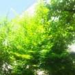 久し振りの植木仕事
