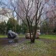 2018.03.22 西新宿 新宿中央公園: 桜の「選手交代」