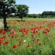 タントピアの花々