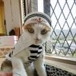 猫の水兵さん