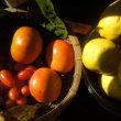 柿とカリンの収穫