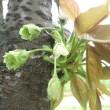 [春ランラン]チューリップと緑の桜