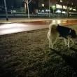 夜散歩 180225